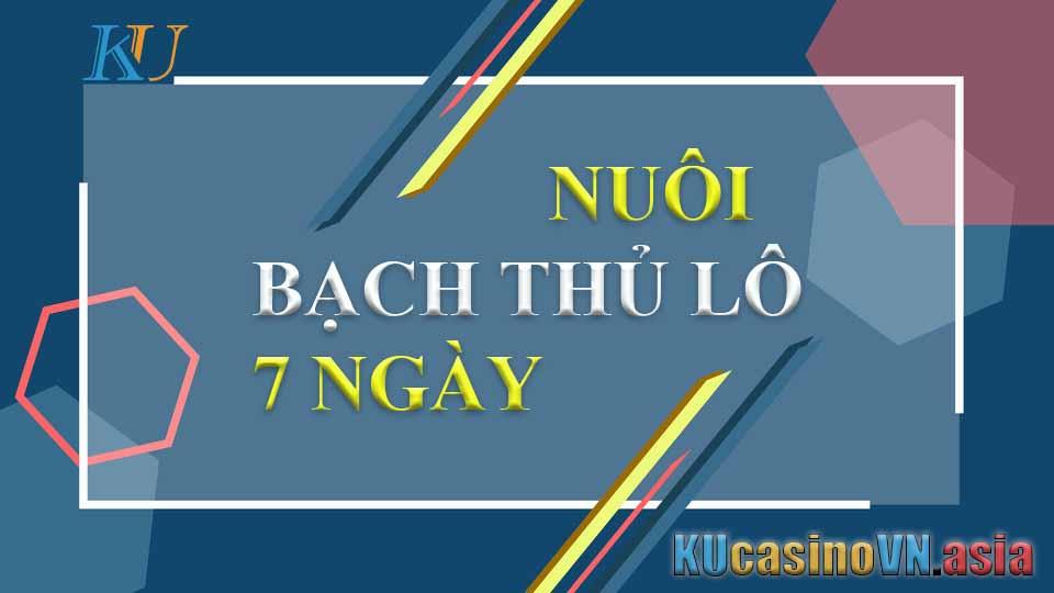 NUÔI BẠCH THỦ LÔ 7 NGÀY