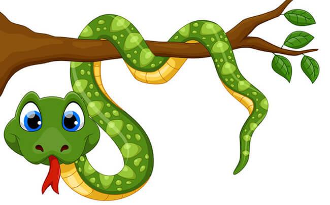 số tuổi rắn