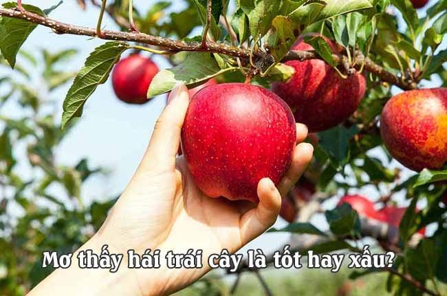 mơ thấy trái cây là dấu hiệu, điềm báo gì