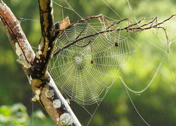 Số con nhện trong mơ