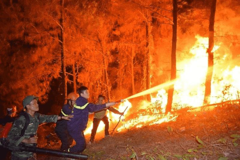 nằm mơ thấy cháy rừng số gì