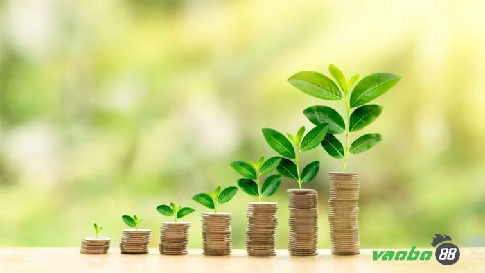 Quản lý vốn cá cược như thế nào?